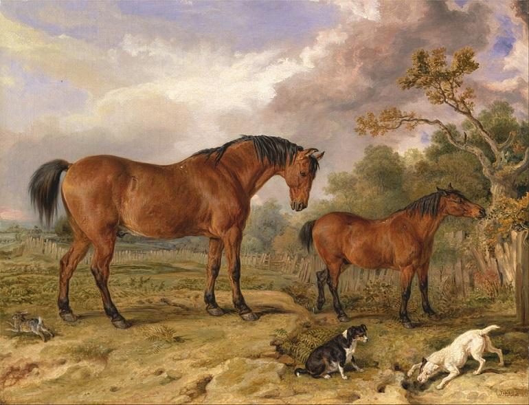Pferdeflüsterer Ostfriese
